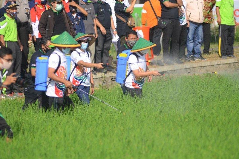 Petrokimia Gresik semprot pupuk Phonska Oca pada tanaman padi