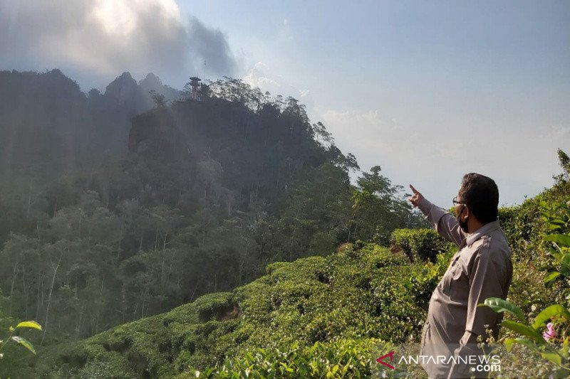 Dinas Pariwisata Kulon Progo diminta membina pelaku wisata Kebun Teh Nglinggo