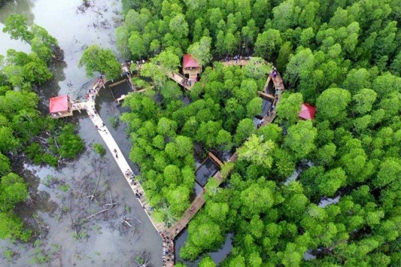 KKP targetkan rehabilitasi 200 hektare lahan mangrove termasuk di Jabar