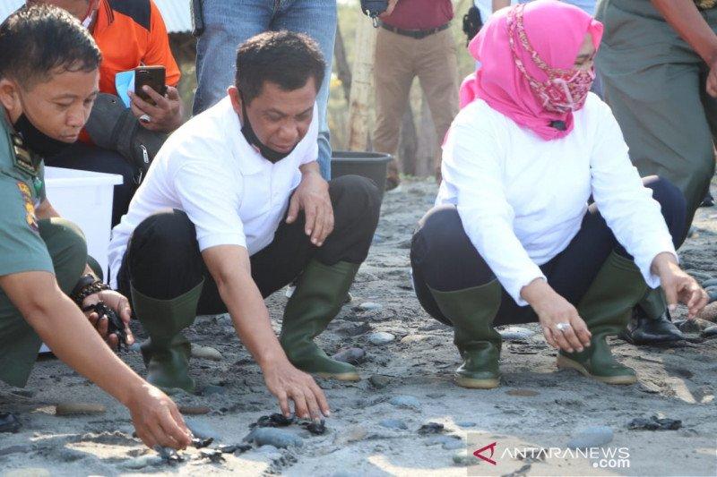 Kapolda Bengkulu Lepaskan 275 Ekor Bayi Penyu Di Pantai Pandan Wangi Antara News