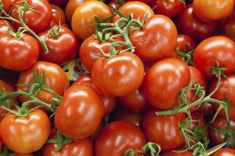 Kelompok tani Cibodas Jabar kembangkan tomat unggul