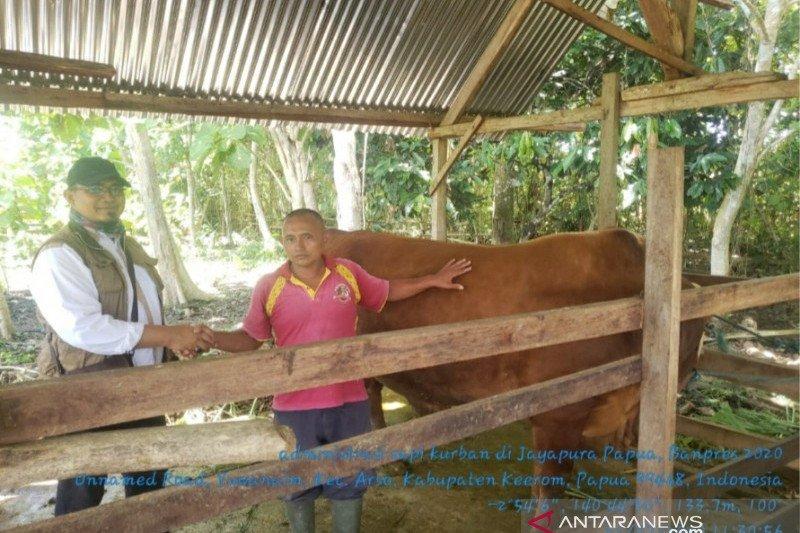 Pemprov Papua terima bantuan sapi kurban dari Presiden Jokowi