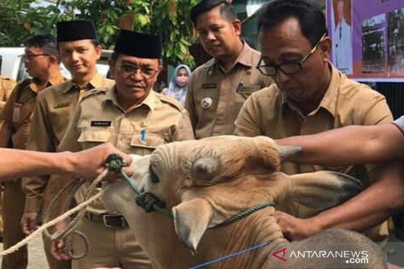 Pemkab Solok Selatan pastikan daging hewan kurban layak dikonsumsi masyarakat