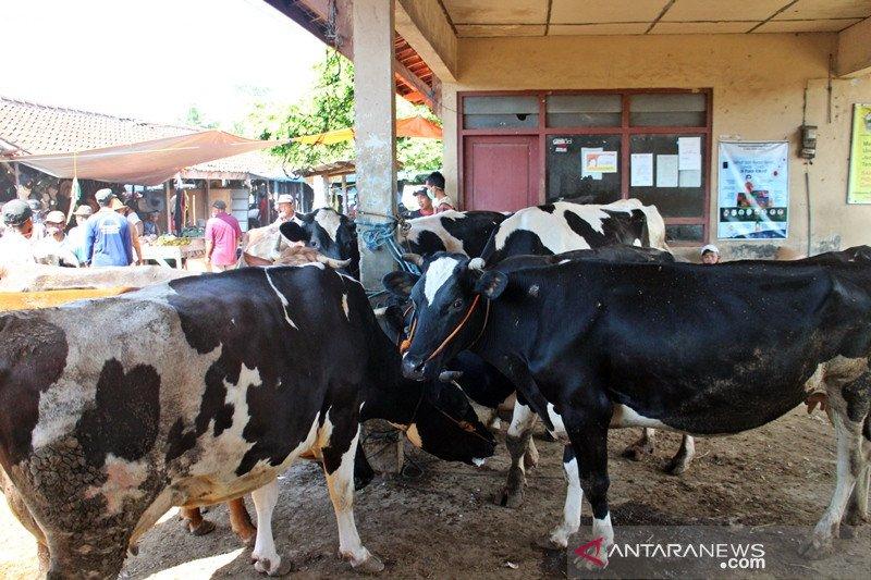 Disnakan Boyolali imbau penyembelihan hewan kurban di RPH