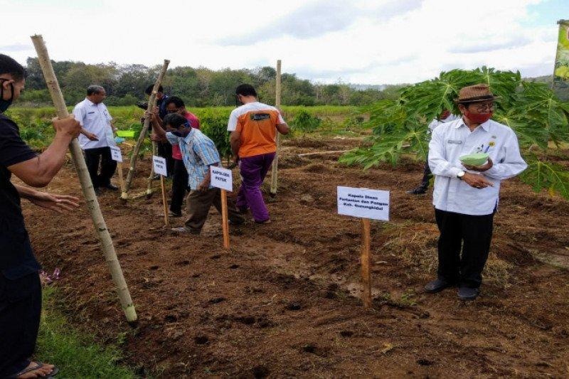 Gunung Kidul menargetkan luas tanam kacang hijau 200 hektare