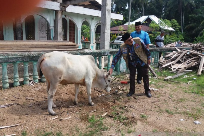 Hari Raya Idul Adha 2020, delapan ekor sapi disalurkan Bupati Pesisir Selatan Hendrajoni untuk kurban