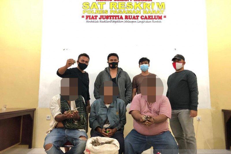 Tiga penjual satwa langka dilindungi ditangkap di Pasaman Barat, 22 kilogram sisik trenggiling diamankan
