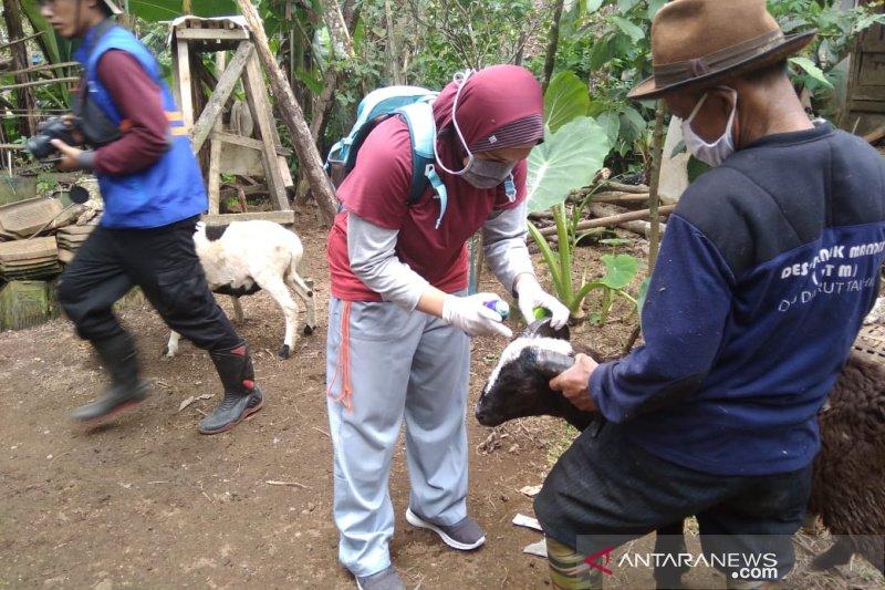 Petugas Diskanak jamin hewan kurban di Garut kondisi sehat