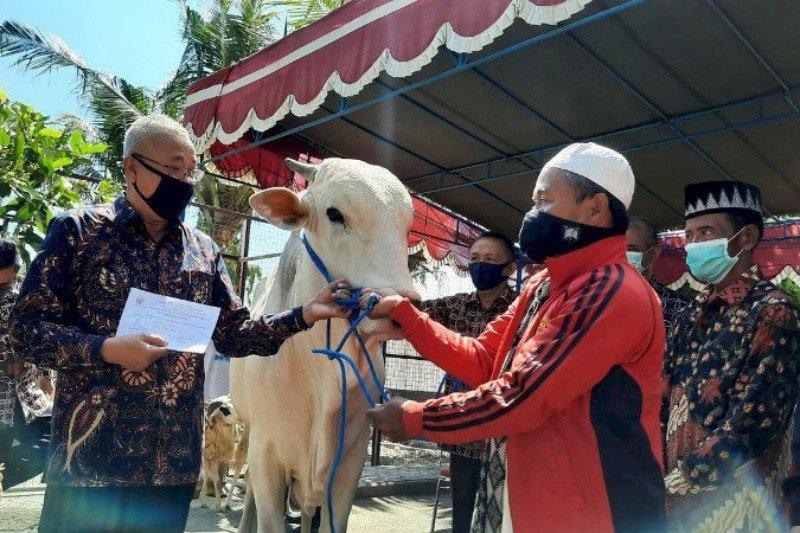 Bantul salurkan bantuan hewan kurban 33 domba