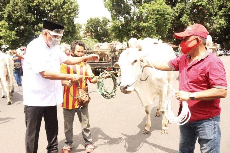 Pemprov Sulawesi Utara  distribusikan 210 sapi kurban
