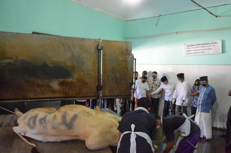 RPH Giwangan Yogyakarta sembelih 146 sapi kurban