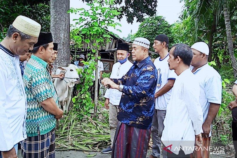 NasDem salurkan 139 sapi kurban untuk warga lima daerah