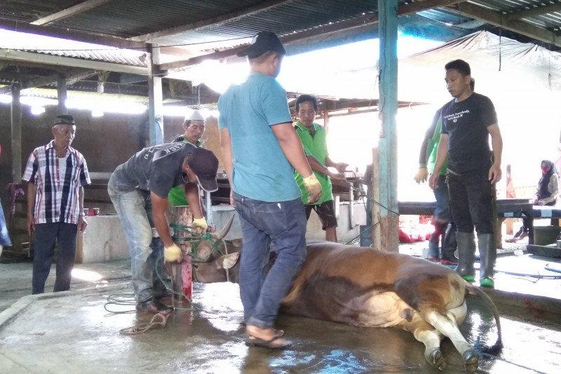 Pelindo IV bagikan 2.746 kilogram daging hewan kurban