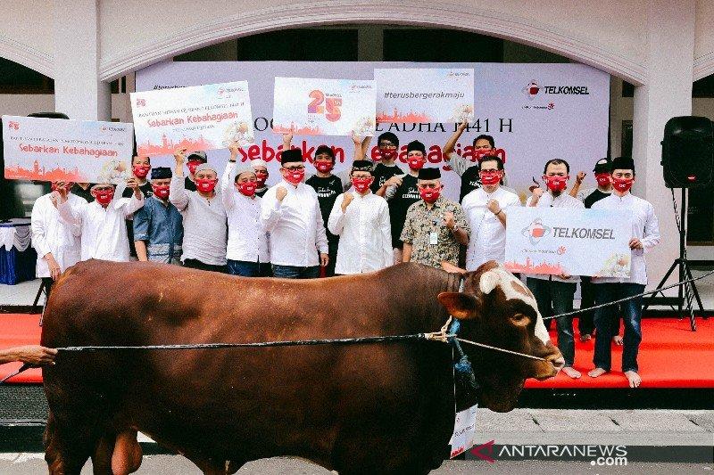 Telkomsel berikan lima sapi kurban untuk wilayah Papua-Maluku