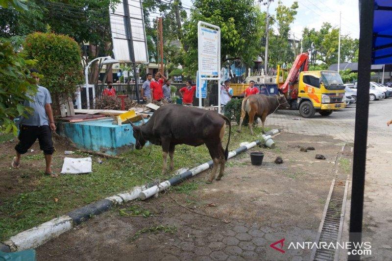 Maknai Idul Adha 1441 H, PLN UIW Sumbar berkurban sepuluh sapi dan lima kambing