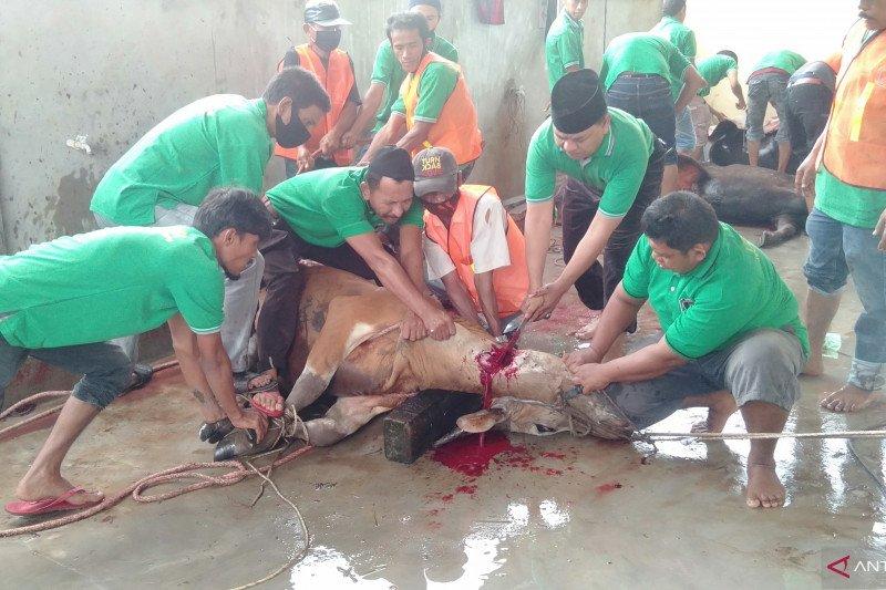 IKMR Bukit Batu kurban 10 sapi