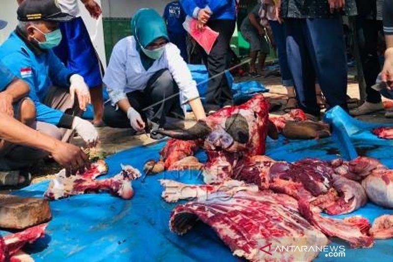 Pemeriksaan daging hewan kurban