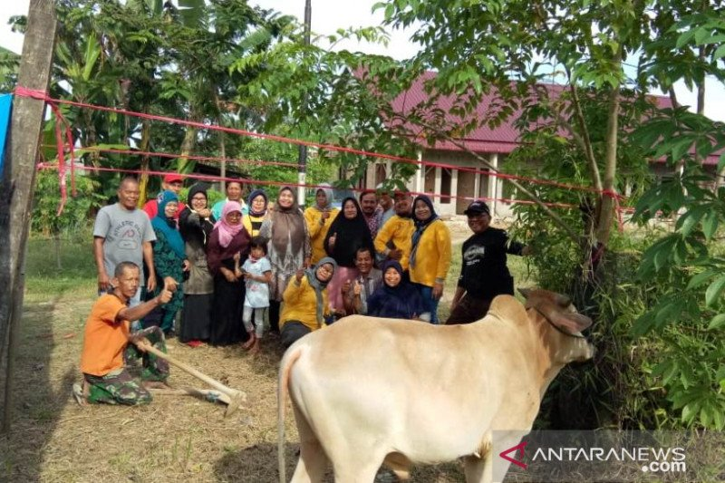 Ikatan Alumni SMA 17 Agustus Padang sembelih dua sapi kurban