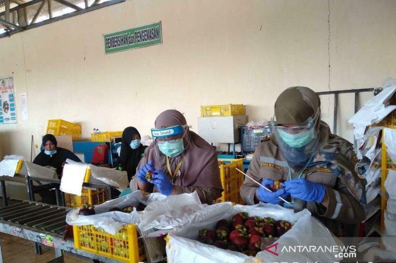Di tengah keterbatasan karena pandemi COVID-19, ekspor manggis Sumbar justru naik hampir dua kali lipat