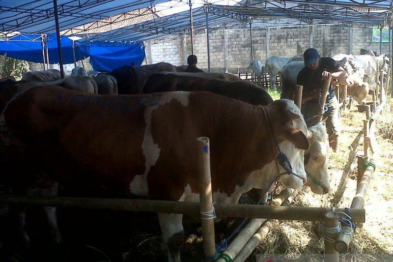 Ditemukan daging sapi tak layak konsumsi di Kota Sukabumi