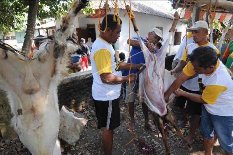 Pemkab Bantul: Tiitik pemotongan hewan kurban bertambah