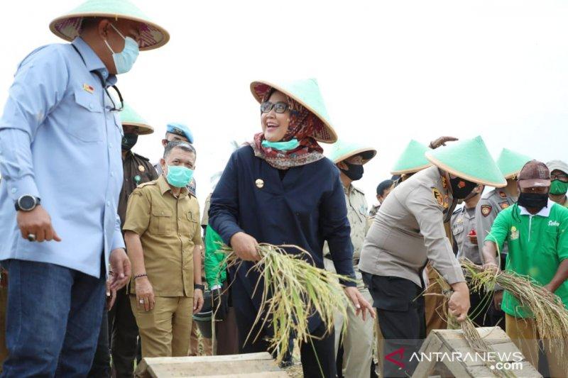 Forkopimda Kabupaten Bogor panen raya padi di lahan seluas 32,3 hektare