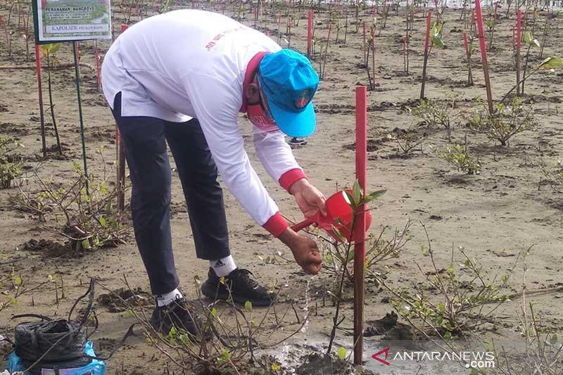 KLHK sebut kerusakan hutan bakau di Indonesia capai 18 persen
