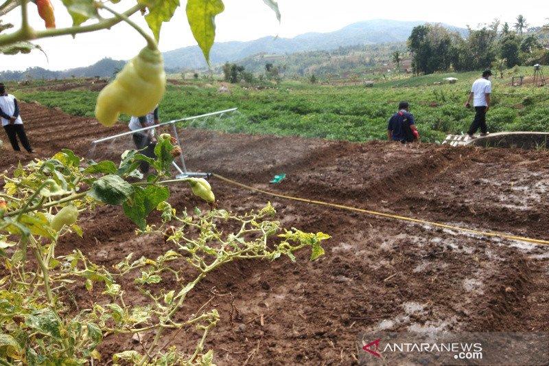 Pengembangan tanaman bawang merah 25 hektare di Bantul bertahap