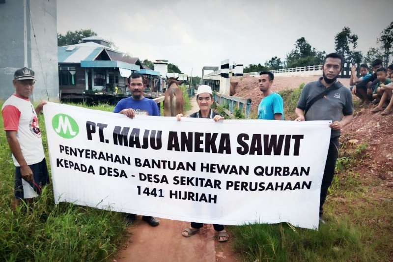 PT Maju Aneka Sawit sumbang hewan kurban untuk lima desa