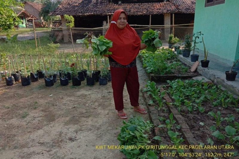 KWT Lampung bermodal 5.000 bisa produksi sayuran