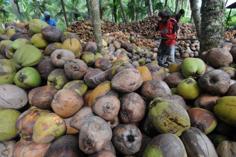 Banyuasin garap potensi pemanfaatan sabut kelapa sisa ekspor