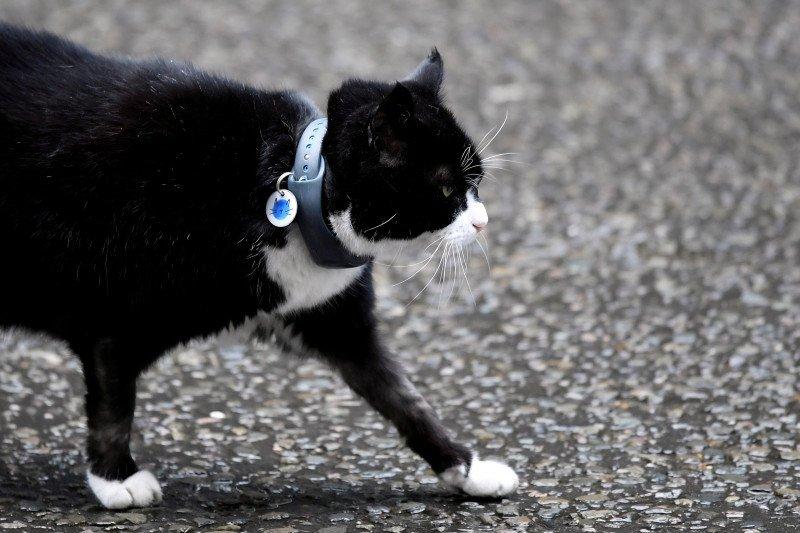 """Kucing """"pegawai"""" di kantor Kemlu Inggris segera pensiun"""
