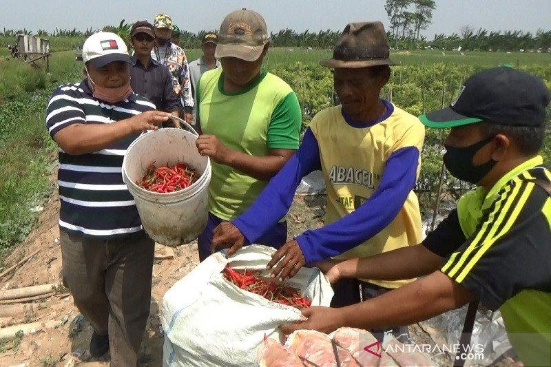 Wakil Ketua Komisi XI: Fungsi perbankan belum maksimal dukung petani