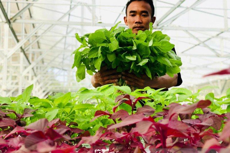 Aquagriculture menjadi solusi ancaman krisis pangan di tengah pandemi