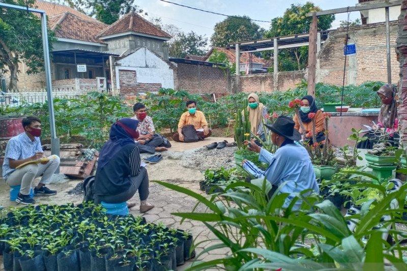Mengasyikkan, bimbingan dan ujian skripsi di kebun
