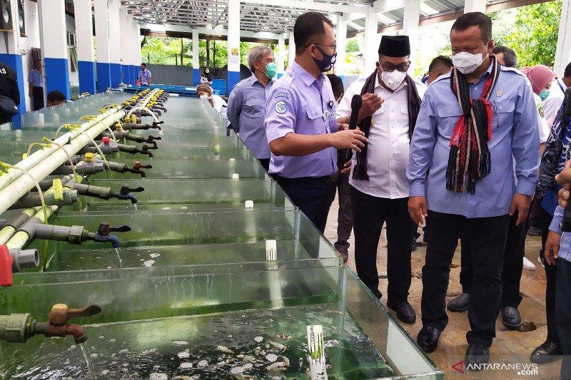 Menteri KKP Edhy Prabowo tantang Pemda di Maluku kembangkan tambak udang