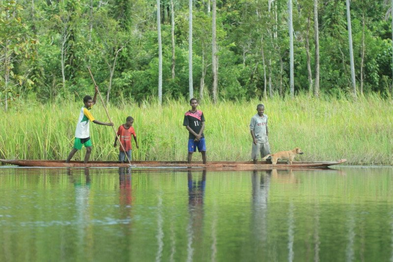 BRG targetkan restorasi 39.239 hektare lahan gambut Papua