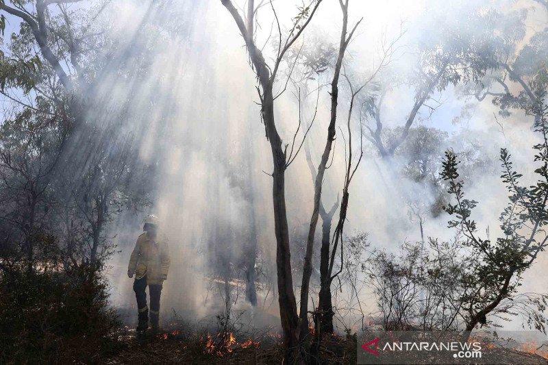 Gelombang panas kembali terjang Australia di hari pertama musim panas
