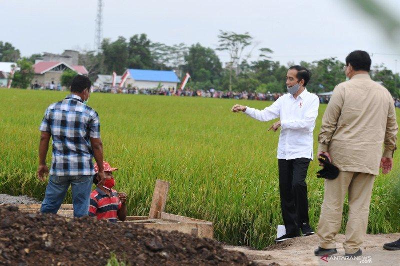 "Presiden Jokowi: Pelaksanaan ""food estate"" menunjukkan kemajuan"