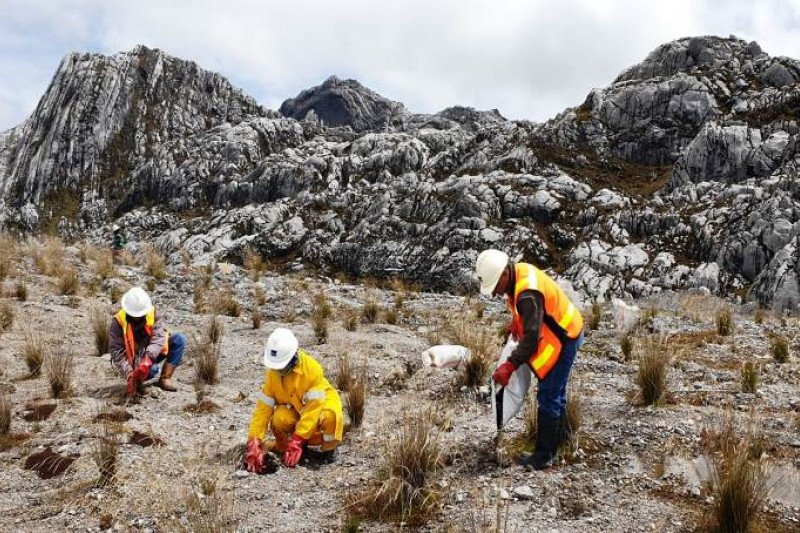 Pakar lingkungan dukung upaya PTFI merestorasi lahan eks tambang terbuka Grasberg