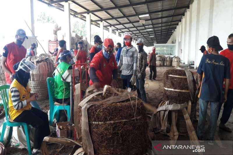 Petani Temanggung keluhkan penyerapan tembakau oleh industri rokok belum optimal