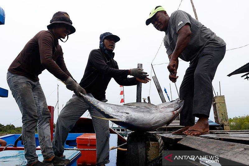 Ekspor ikan beku Sulut ke Amerika tetap stabil di tengah COVID-19