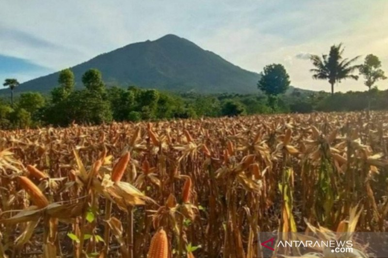 NTT siapkan Rp100 miliar dari pinjaman daerah untuk kembangkan pertanian