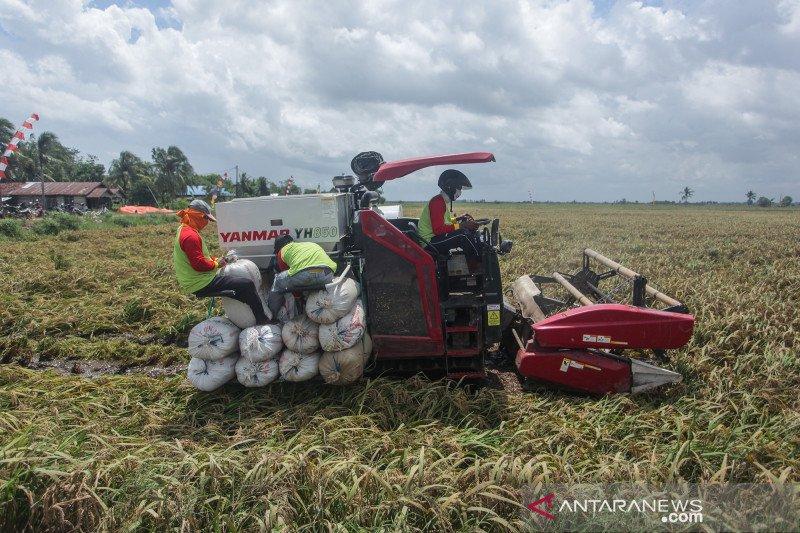 Guru Besar IPB proyeksikan PDB sektor pertanian kuartal III-IV turun