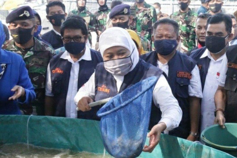 Wow, ekspor udang Jawa Timur meningkat saat pandemi