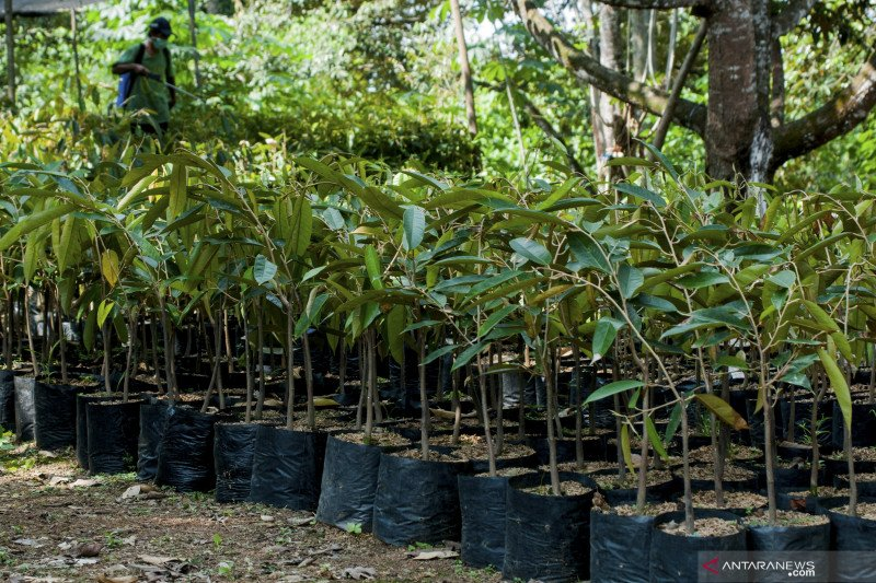KPI Ogan Komering Ulu tanam 500  bibit pohon