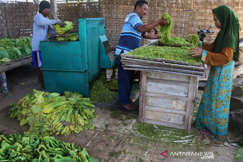 Pemerintah diminta melindungi petani tembakau melalui tarif cukai