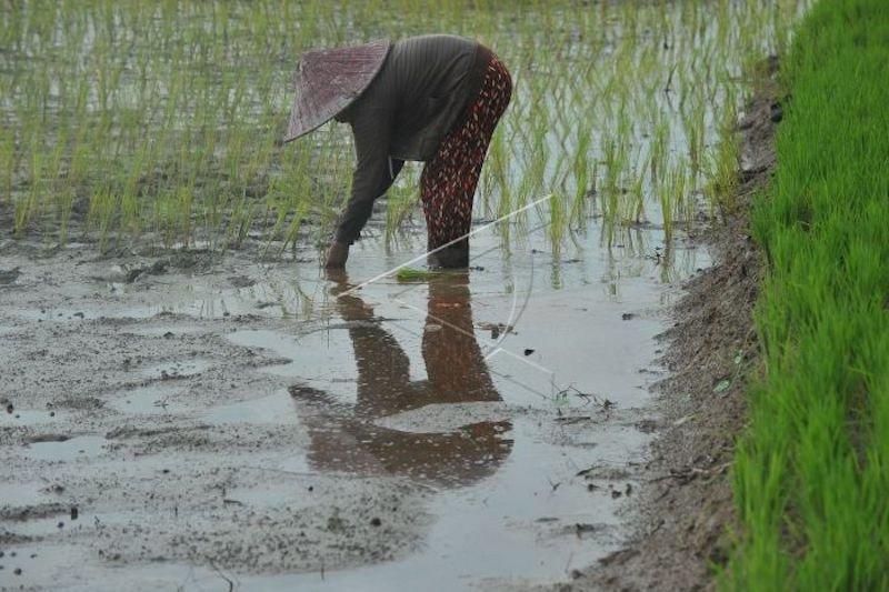 Ekspor pertanian Sumsel  meningkat 52 persen