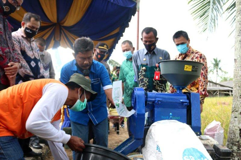 Bank Kalsel bantu petani kembangkan padi unggul untuk ketahanan pangan daerah