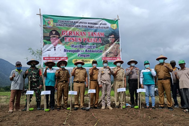 Bupati Morowali Utara pimpin gerakan tanam jagung hibrida